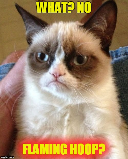 Grumpy Cat Meme | WHAT? NO FLAMING HOOP? | image tagged in memes,grumpy cat | made w/ Imgflip meme maker