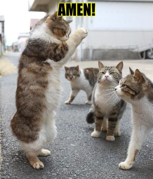 Cat Pastor | AMEN! | image tagged in cat pastor | made w/ Imgflip meme maker