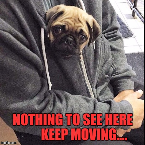 NOTHING TO SEE HERE         KEEP MOVING.... | made w/ Imgflip meme maker