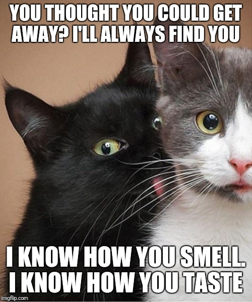 YOU THOUGHT YOU COULD GET AWAY? I'LL ALWAYS FIND YOU I KNOW HOW YOU SMELL. I KNOW HOW YOU TASTE | image tagged in creepy stalker cat | made w/ Imgflip meme maker