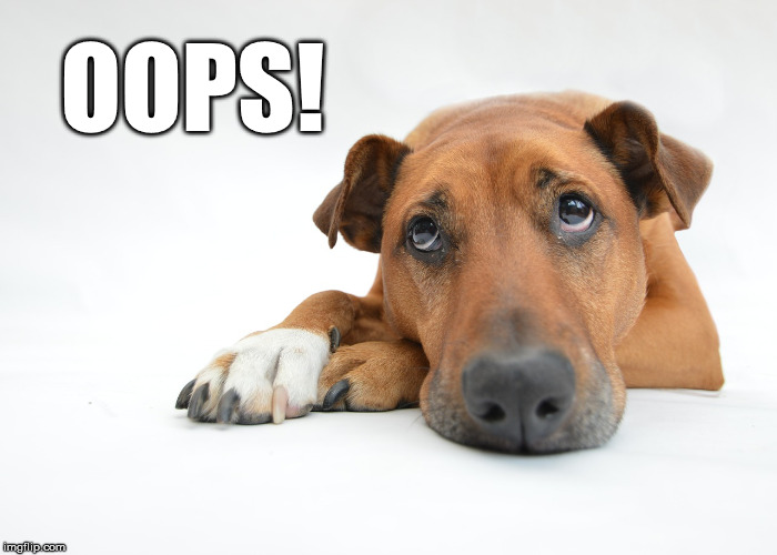 Dog says oops | OOPS! | image tagged in oops,whoops | made w/ Imgflip meme maker