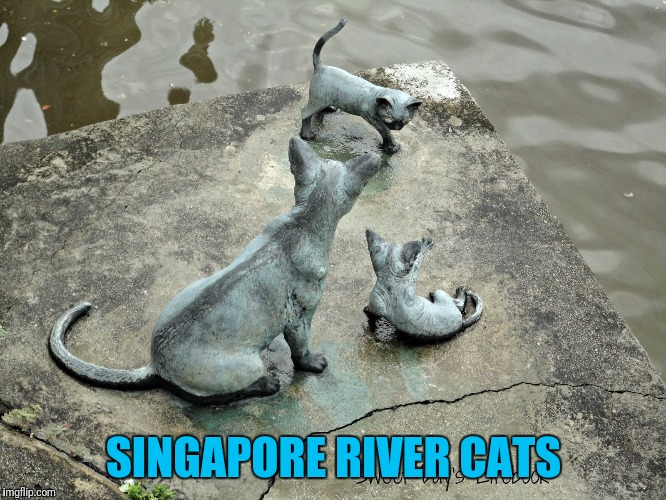 SINGAPORE RIVER CATS | made w/ Imgflip meme maker
