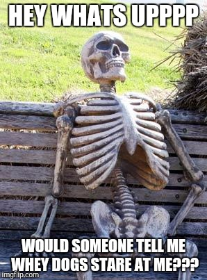 Waiting Skeleton Meme | HEY WHATS UPPPP WOULD SOMEONE TELL ME WHEY DOGS STARE AT ME??? | image tagged in memes,waiting skeleton | made w/ Imgflip meme maker