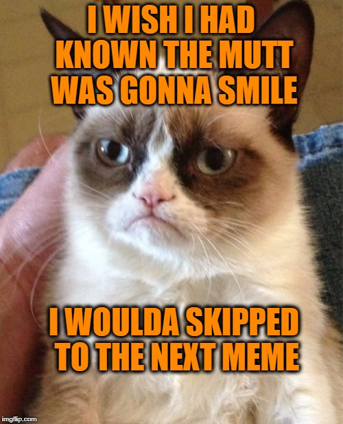 Grumpy Cat Meme | I WISH I HAD KNOWN THE MUTT WAS GONNA SMILE I WOULDA SKIPPED TO THE NEXT MEME | image tagged in memes,grumpy cat | made w/ Imgflip meme maker