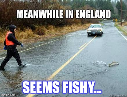 SEEMS FISHY... | image tagged in animals,funny,memes,comedy | made w/ Imgflip meme maker