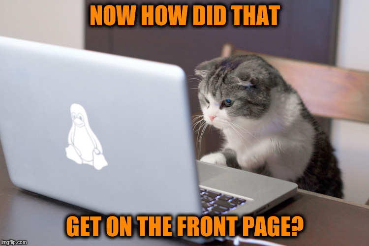 Now how did that get on the front page? | NOW HOW DID THAT GET ON THE FRONT PAGE? | image tagged in memes,cats,computers,frontpage,front page,cute cat | made w/ Imgflip meme maker