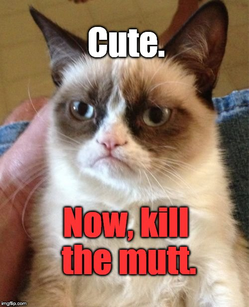 Grumpy Cat Meme | Cute. Now, kill the mutt. | image tagged in memes,grumpy cat | made w/ Imgflip meme maker