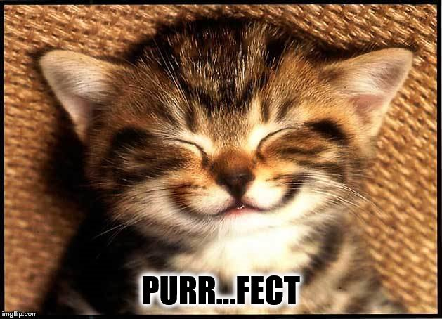 A Happy Cat. | PURR...FECT | image tagged in memes,cat memes,smiling cat,perfect,life | made w/ Imgflip meme maker