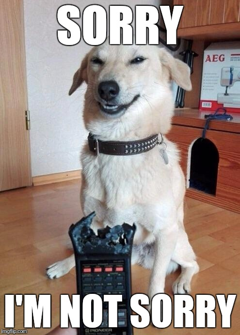 Not even remotely sorry | SORRY I'M NOT SORRY | image tagged in memes,dogs,remote control,animals,funny,chew | made w/ Imgflip meme maker