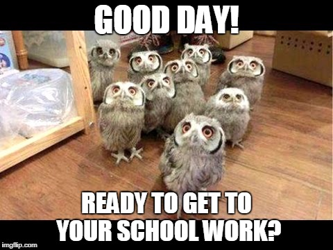 GOOD DAY! READY TO GET TO YOUR SCHOOL WORK? | image tagged in parliament of owls | made w/ Imgflip meme maker