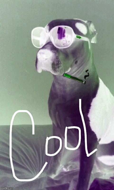 image tagged in cool dog with shades negative | made w/ Imgflip meme maker