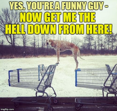 Umm...a little help here? | YES. YOU'RE A FUNNY GUY - NOW GET ME THE HELL DOWN FROM HERE! | image tagged in funny | made w/ Imgflip meme maker