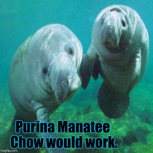 Purina Manatee Chow would work. | made w/ Imgflip meme maker