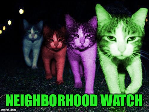 Wrong Neighborhood RayCats | NEIGHBORHOOD WATCH | image tagged in wrong neighborhood raycats | made w/ Imgflip meme maker