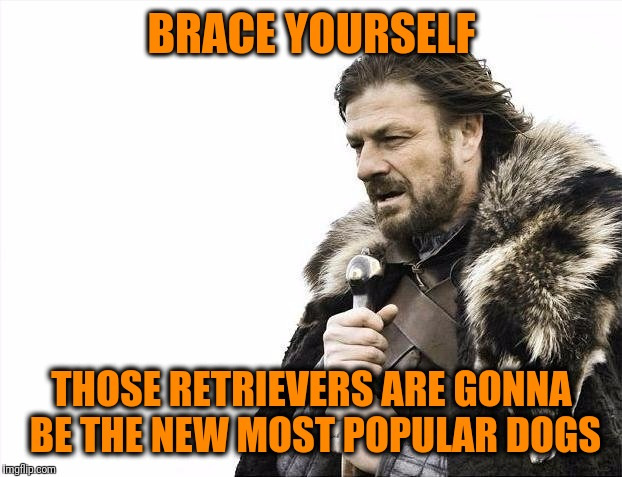 Brace Yourselves X is Coming Meme | BRACE YOURSELF THOSE RETRIEVERS ARE GONNA BE THE NEW MOST POPULAR DOGS | image tagged in memes,brace yourselves x is coming | made w/ Imgflip meme maker
