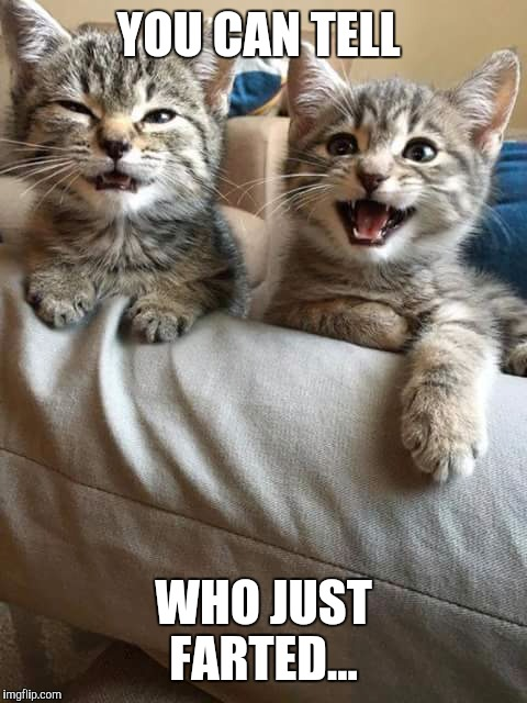 YOU CAN TELL WHO JUST FARTED... | image tagged in kitten,fart | made w/ Imgflip meme maker