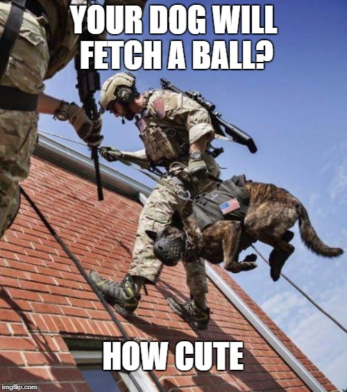 YOUR DOG WILL FETCH A BALL? HOW CUTE | image tagged in german shepherd | made w/ Imgflip meme maker
