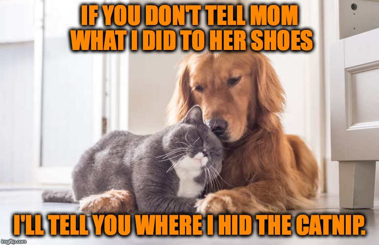 Let's Make A Deal | IF YOU DON'T TELL MOM WHAT I DID TO HER SHOES I'LL TELL YOU WHERE I HID THE CATNIP. | image tagged in best buddies | made w/ Imgflip meme maker