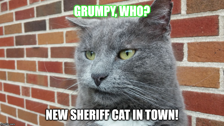 Evil Cat | GRUMPY, WHO? NEW SHERIFF CAT IN TOWN! | image tagged in evil cat | made w/ Imgflip meme maker