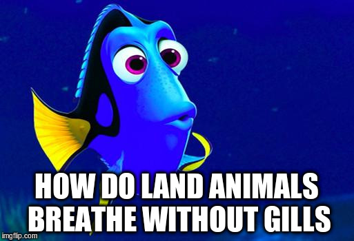 HOW DO LAND ANIMALS BREATHE WITHOUT GILLS | made w/ Imgflip meme maker