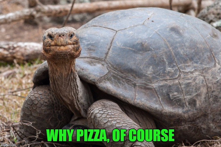 WHY PIZZA, OF COURSE | made w/ Imgflip meme maker