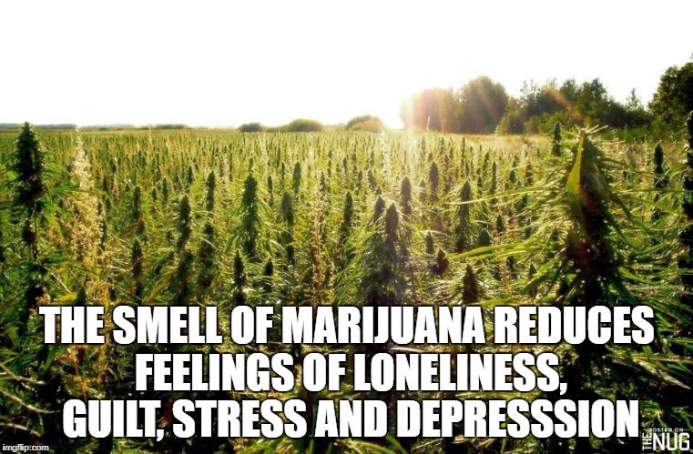 THE SMELL OF MARIJUANA REDUCES FEELINGS OF LONELINESS, GUILT, STRESS AND DEPRESSSION | image tagged in field | made w/ Imgflip meme maker