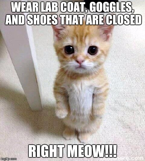 Cute Cat Meme | WEAR LAB COAT, GOGGLES, AND SHOES THAT ARE CLOSED RIGHT MEOW!!! | image tagged in memes,cute cat | made w/ Imgflip meme maker