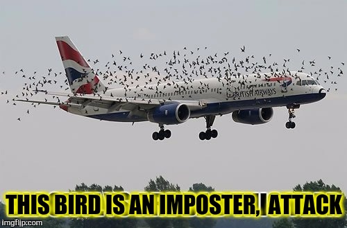 THIS BIRD IS AN IMPOSTER,  ATTACK | made w/ Imgflip meme maker