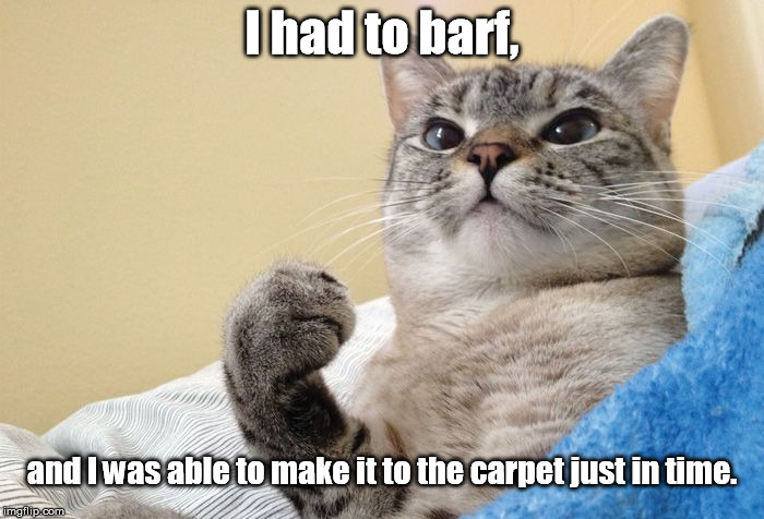 Hörky barfy pukey | I had to barf, and I was able to make it to the carpet just in time. | image tagged in success cat,memes,meme | made w/ Imgflip meme maker