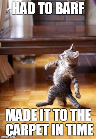 Cool Cat Stroll Meme | HAD TO BARF MADE IT TO THE CARPET IN TIME | image tagged in memes,cool cat stroll | made w/ Imgflip meme maker