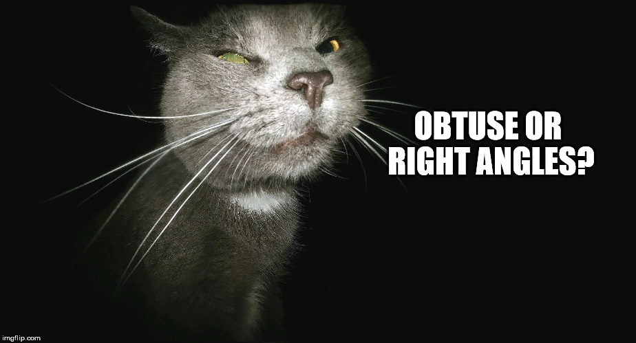 Stalker Cat | OBTUSE OR RIGHT ANGLES? | image tagged in stalker cat | made w/ Imgflip meme maker