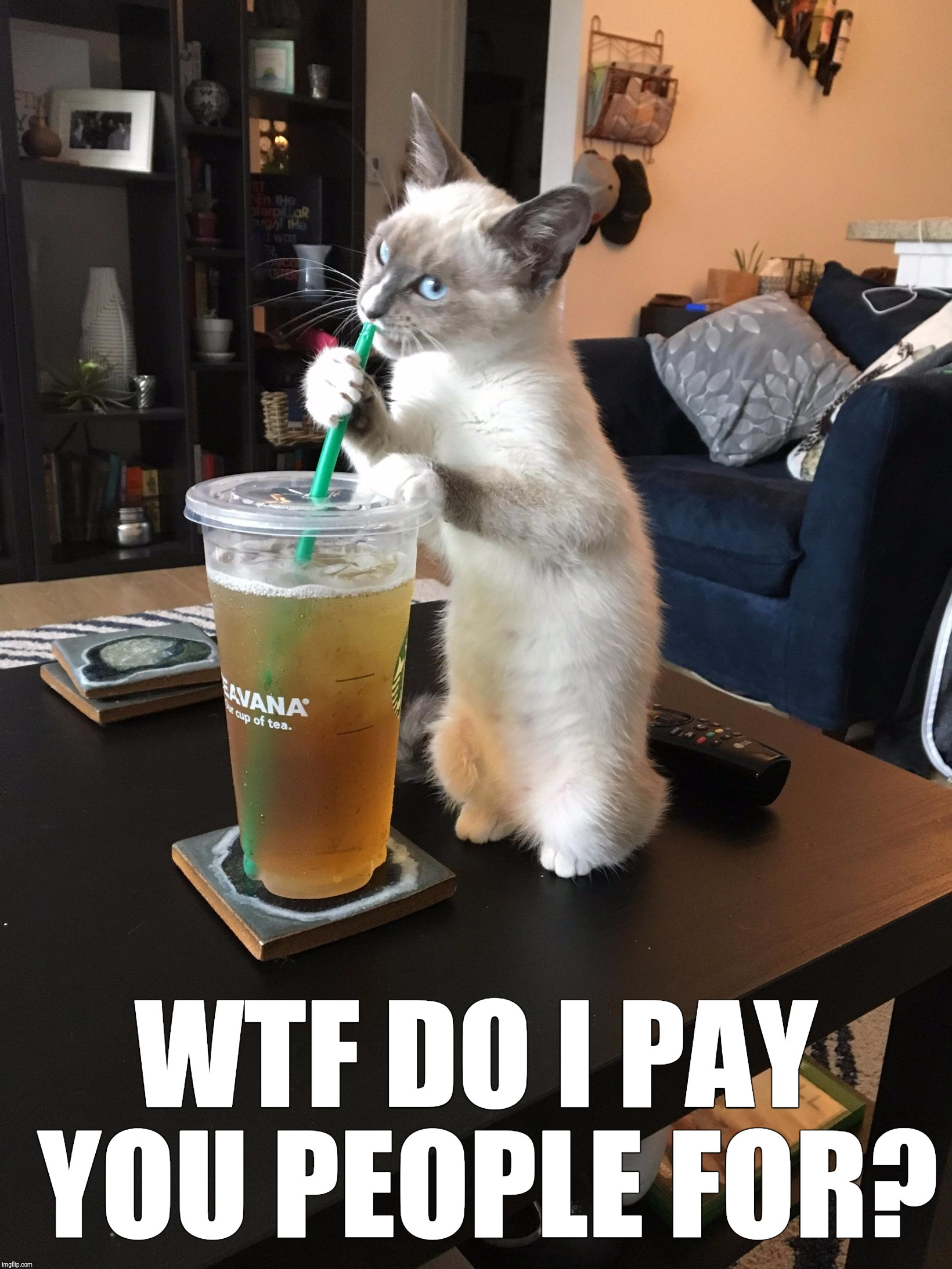 Get to work bitches... | WTF DO I PAY YOU PEOPLE FOR? | image tagged in iced tea cat | made w/ Imgflip meme maker