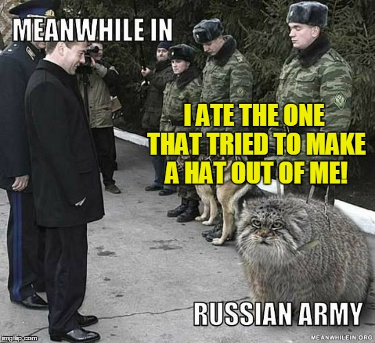 Russian cat in the army | I ATE THE ONE THAT TRIED TO MAKE A HAT OUT OF ME! | image tagged in meme,badass,cat,dog,russian army,russia | made w/ Imgflip meme maker