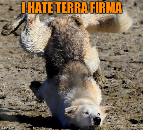 I HATE TERRA FIRMA | made w/ Imgflip meme maker