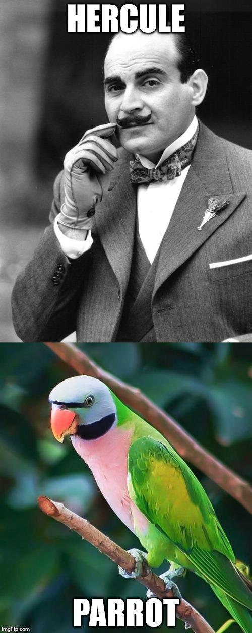 Fictional detective gets the bird | HERCULE PARROT | image tagged in memes | made w/ Imgflip meme maker
