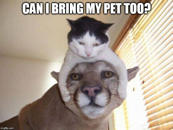 Hey...Wait a Minute. | CAN I BRING MY PET TOO? | image tagged in memes,cat,tiger,can i bring,my pet | made w/ Imgflip meme maker