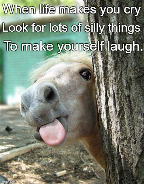 When life makes you cry To make yourself laugh. Look for lots of silly things | image tagged in funny-horse | made w/ Imgflip meme maker