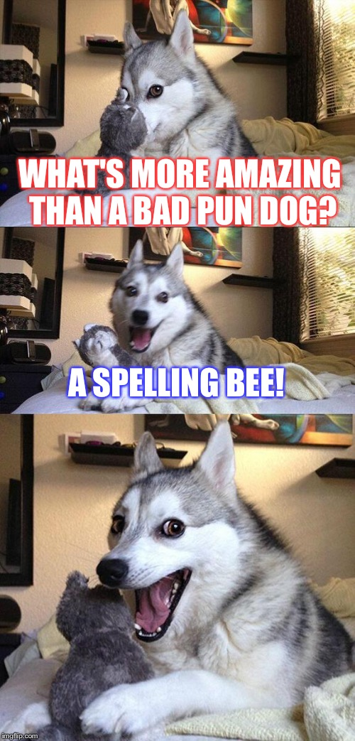 Bad Pun Dog Meme | WHAT'S MORE AMAZING THAN A BAD PUN DOG? A SPELLING BEE! | image tagged in memes,bad pun dog | made w/ Imgflip meme maker