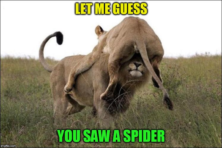 LET ME GUESS YOU SAW A SPIDER | made w/ Imgflip meme maker