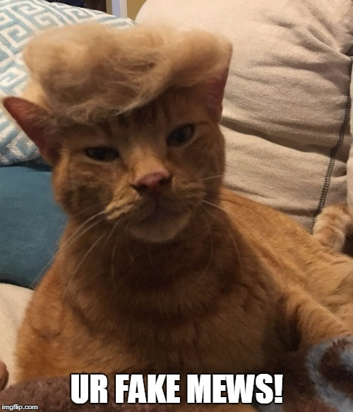 UR FAKE MEWS! | image tagged in fake mews | made w/ Imgflip meme maker