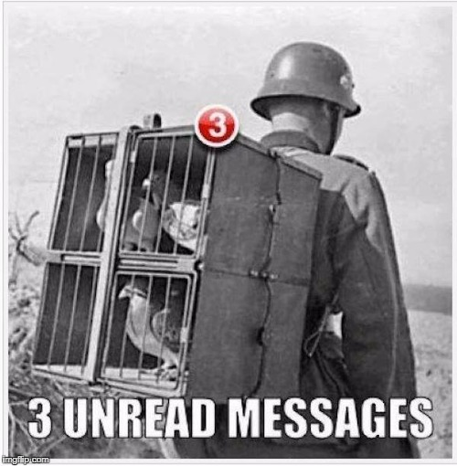 pigeonmail | image tagged in funny,funny memes,funny animals | made w/ Imgflip meme maker