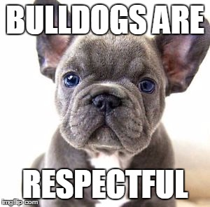 French bulldog | BULLDOGS ARE RESPECTFUL | image tagged in french bulldog | made w/ Imgflip meme maker