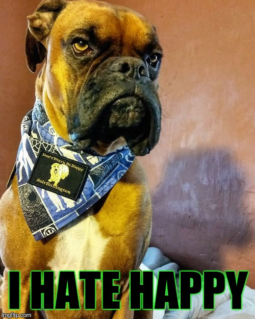 Grumpy Dog | I HATE HAPPY | image tagged in grumpy dog | made w/ Imgflip meme maker