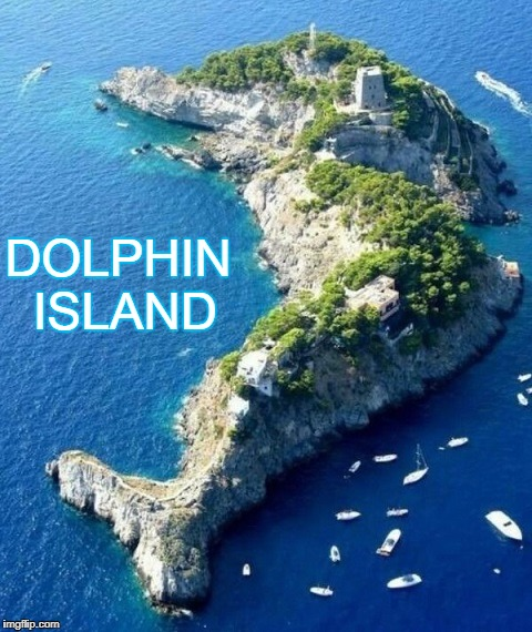 There's something fishy |  DOLPHIN ISLAND | image tagged in funny meme,dolphin,island | made w/ Imgflip meme maker