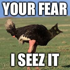 Run | YOUR FEAR I SEEZ IT | image tagged in catstich,oh hai,oh hell no,catslovers,ostrich,has science gone too far | made w/ Imgflip meme maker