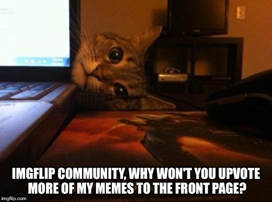 IMGFLIP COMMUNITY, WHY WON'T YOU UPVOTE MORE OF MY MEMES TO THE FRONT PAGE? | image tagged in jealous cat | made w/ Imgflip meme maker