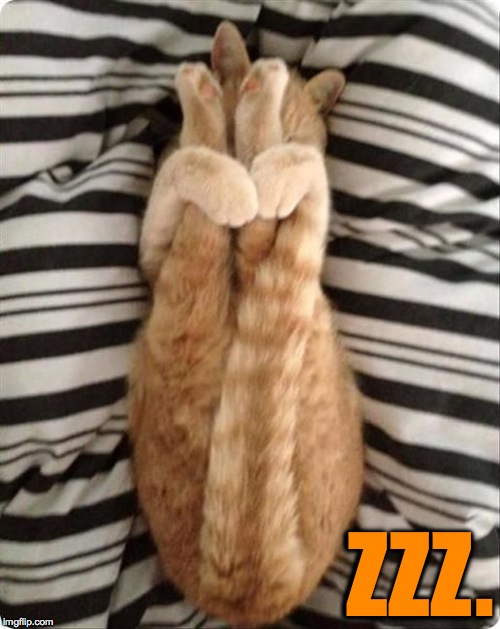 Stretching The Limits | ZZZ. | image tagged in yoga cat | made w/ Imgflip meme maker