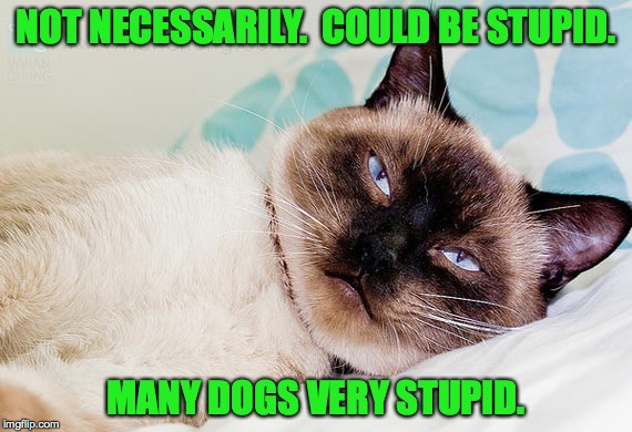 NOT NECESSARILY.  COULD BE STUPID. MANY DOGS VERY STUPID. | made w/ Imgflip meme maker
