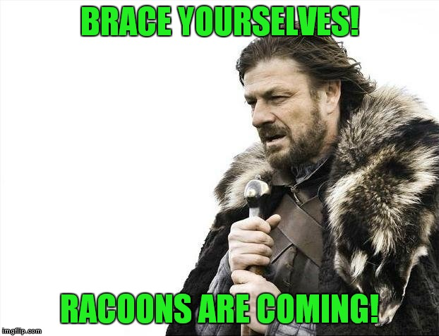 Brace Yourselves X is Coming Meme | BRACE YOURSELVES! RACOONS ARE COMING! | image tagged in memes,brace yourselves x is coming | made w/ Imgflip meme maker