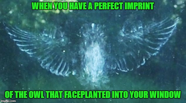 That owl must've been blind...that window's not even clean! | WHEN YOU HAVE A PERFECT IMPRINT OF THE OWL THAT FACEPLANTED INTO YOUR WINDOW | image tagged in owl faceplant,memes,owls,funny,animals,window pain | made w/ Imgflip meme maker
